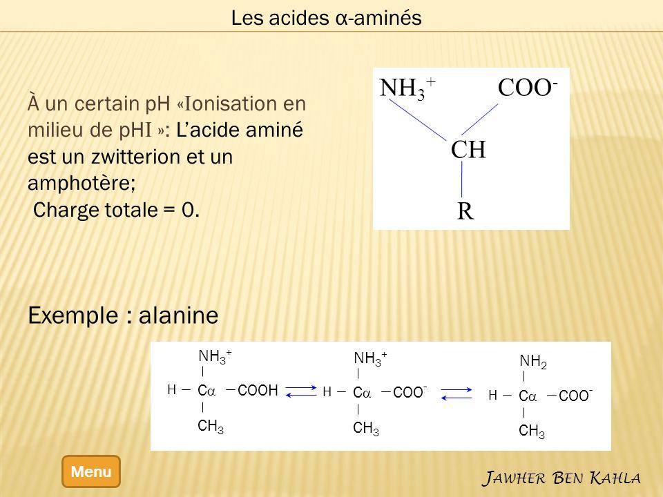NH3+ COO- CH R Exemple : alanine Les acides α-aminés