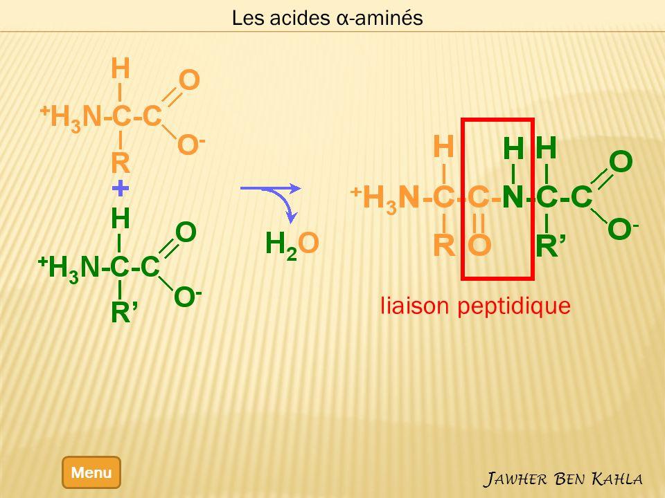 Les acides α-aminés liaison peptidique Menu Jawher Ben Kahla