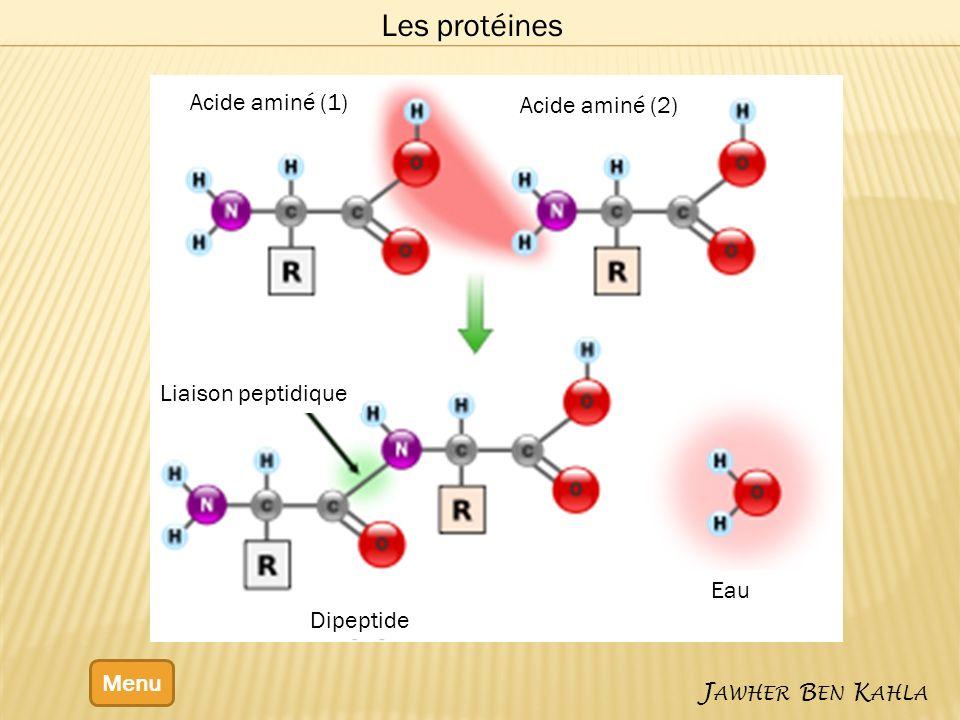 Les protéines Acide aminé (1) Acide aminé (2) Liaison peptidique Eau