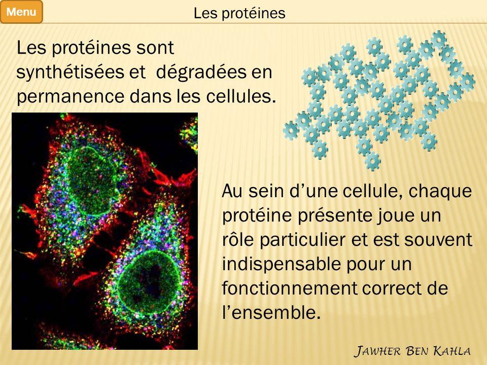 Au sein d'une cellule, chaque protéine présente joue un