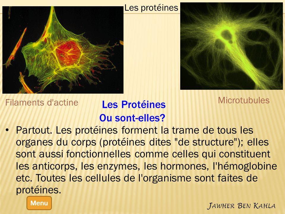 Les Protéines Ou sont-elles