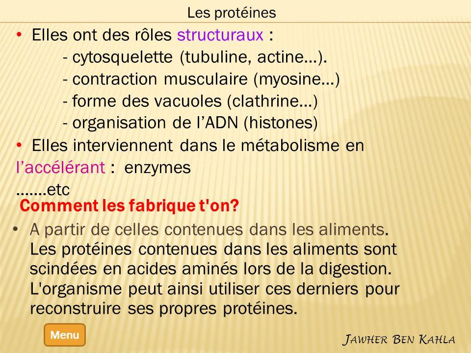 Elles ont des rôles structuraux : - cytosquelette (tubuline, actine…).