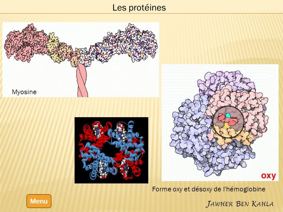 Forme oxy et désoxy de l hémoglobine