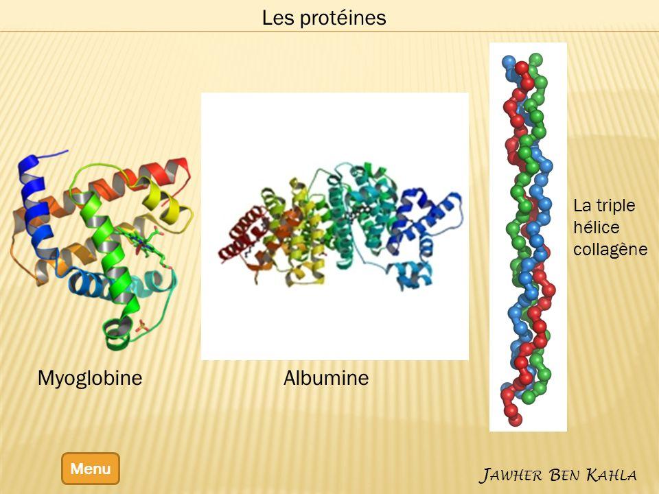 Les protéines Myoglobine Albumine La triple hélice collagène Menu