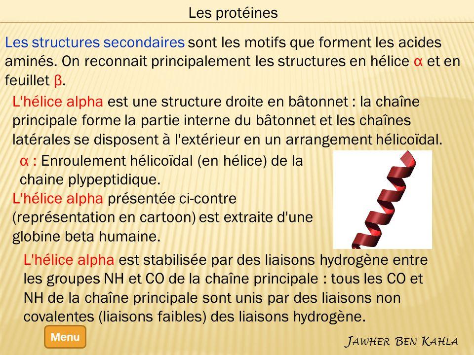 α : Enroulement hélicoïdal (en hélice) de la chaine plypeptidique.
