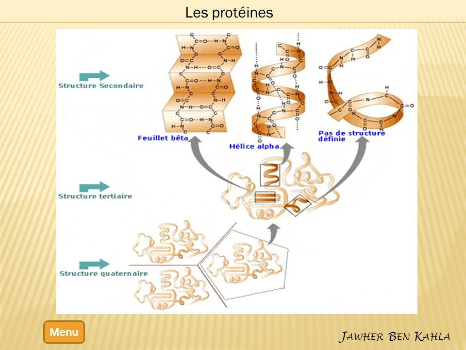 Les protéines Menu Jawher Ben Kahla