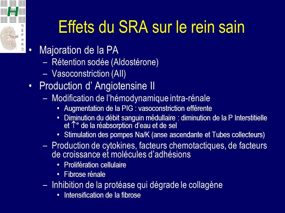 Effets du SRA sur le rein sain