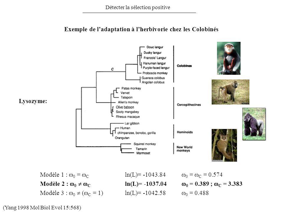 Exemple de l'adaptation à l'herbivorie chez les Colobinés