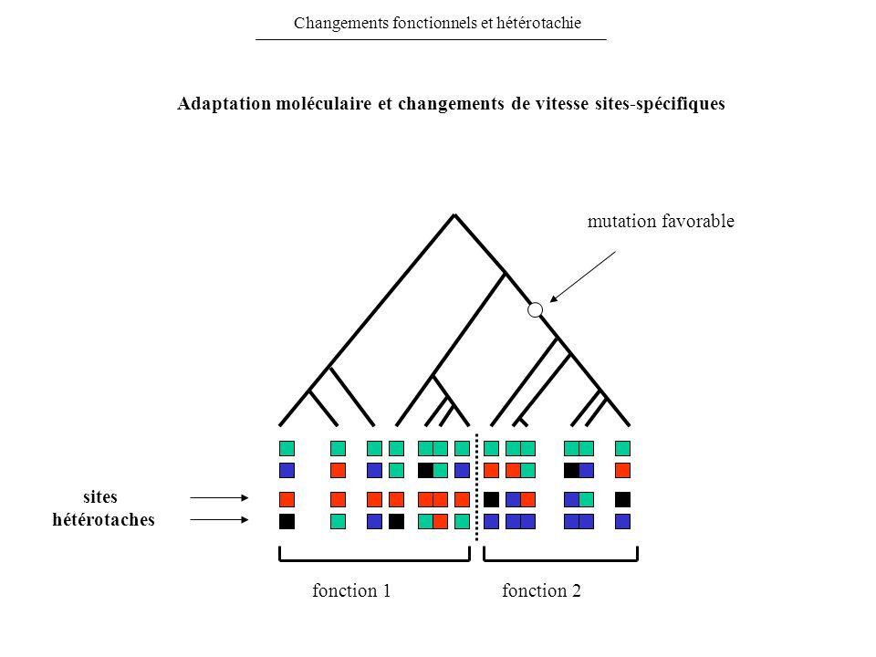 Adaptation moléculaire et changements de vitesse sites-spécifiques