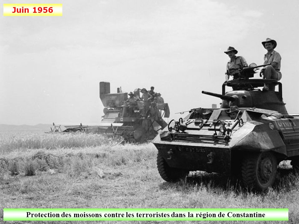 Juin 1956 Protection des moissons contre les terroristes dans la région de Constantine