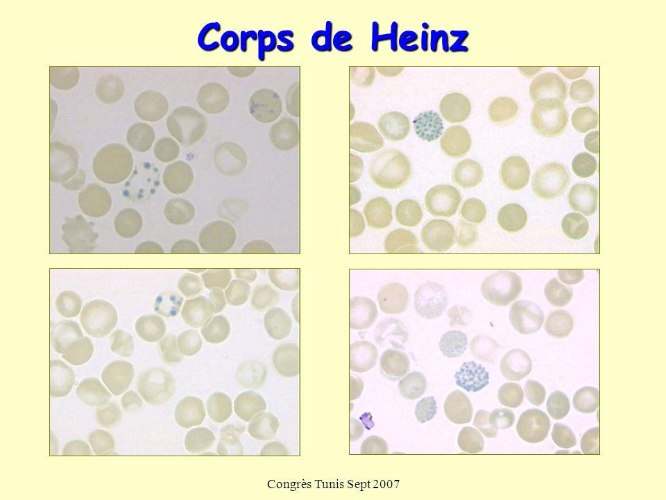 Corps de Heinz Congrès Tunis Sept 2007