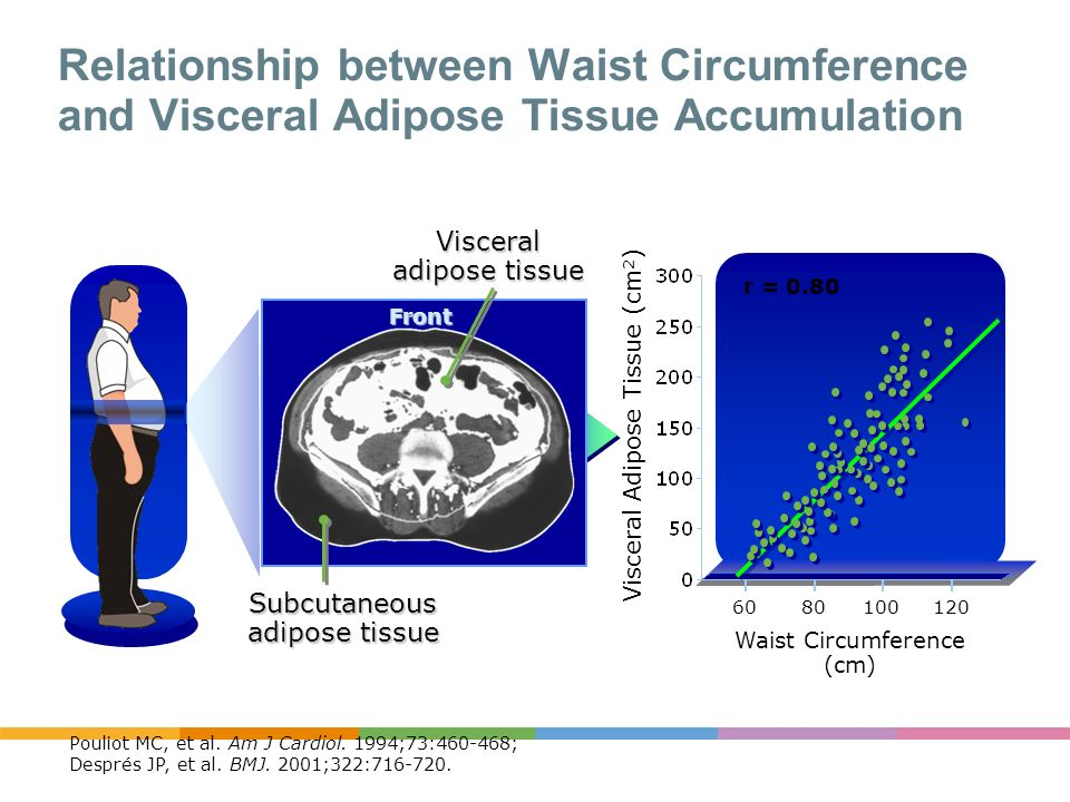 Relationship between Waist Circumference and Visceral Adipose Tissue Accumulation