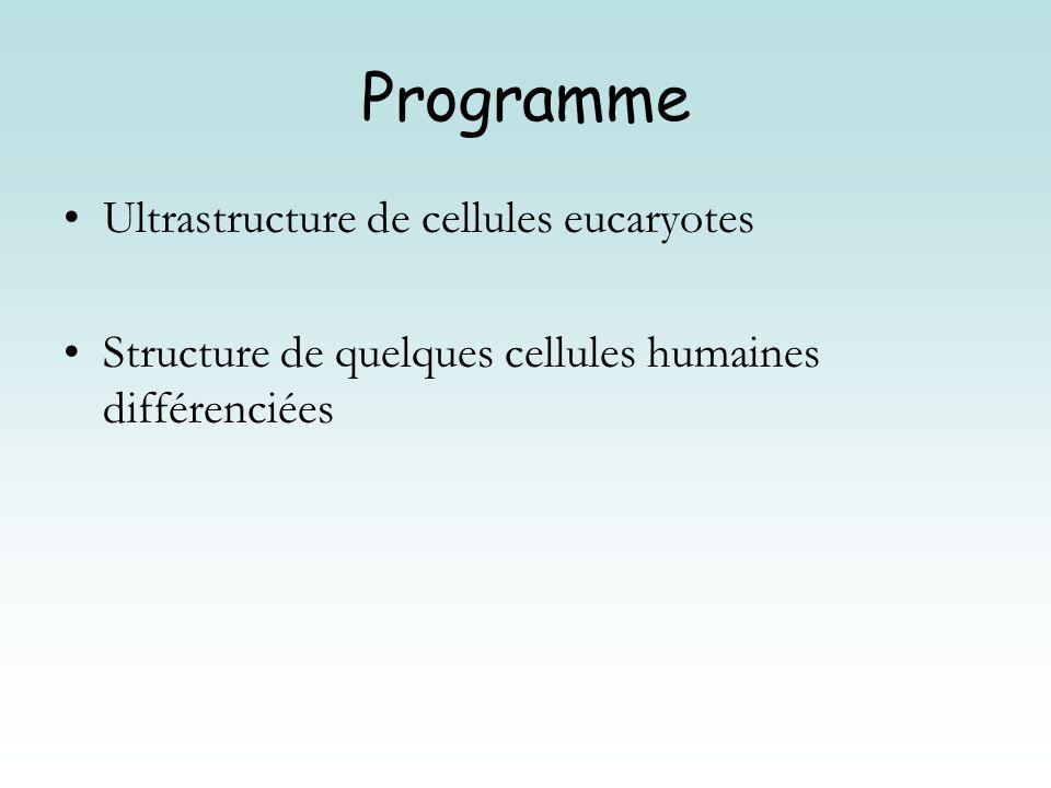 Programme Ultrastructure de cellules eucaryotes