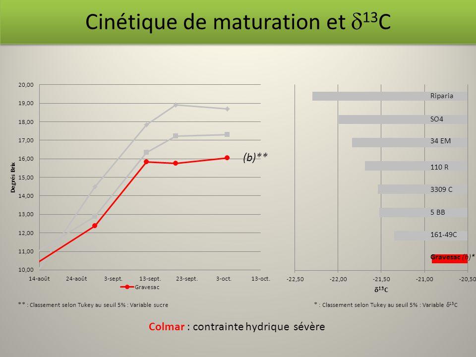 Cinétique de maturation et d13C