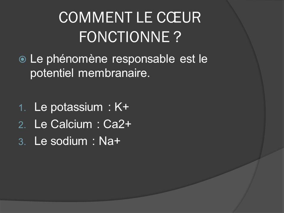 COMMENT LE CŒUR FONCTIONNE