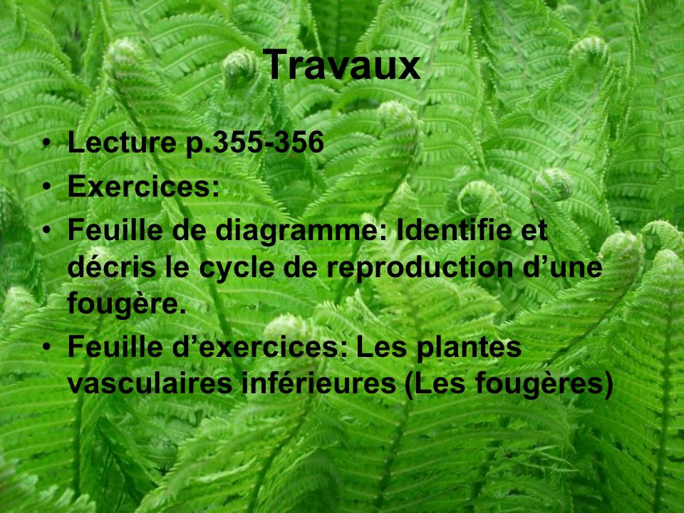 Travaux Lecture p Exercices:
