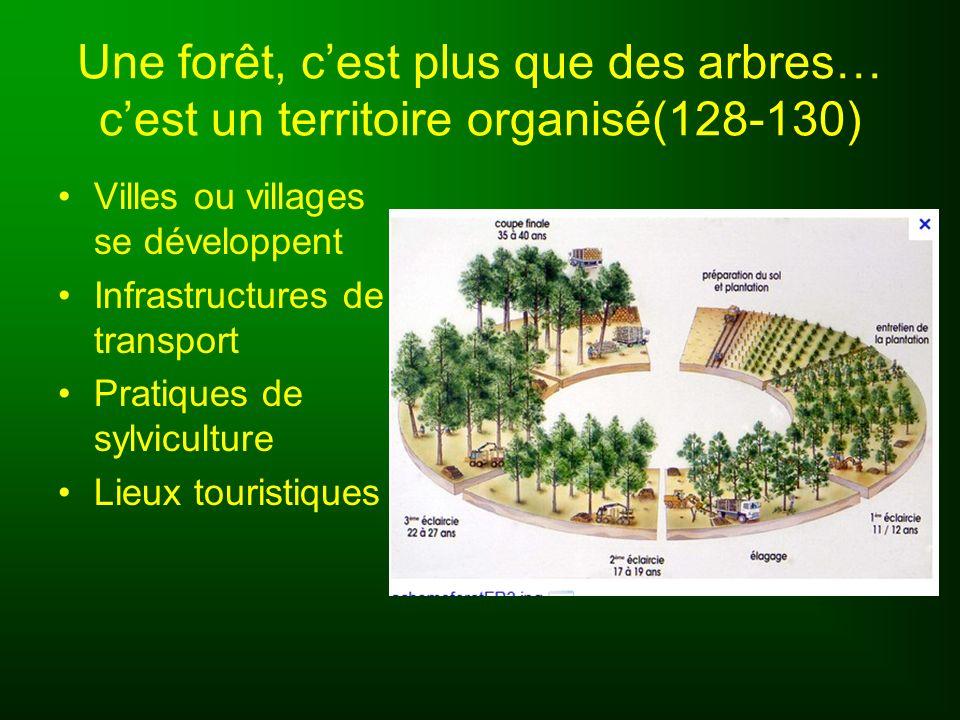 Une forêt, c'est plus que des arbres… c'est un territoire organisé(128-130)