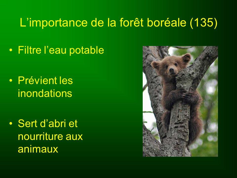L'importance de la forêt boréale (135)