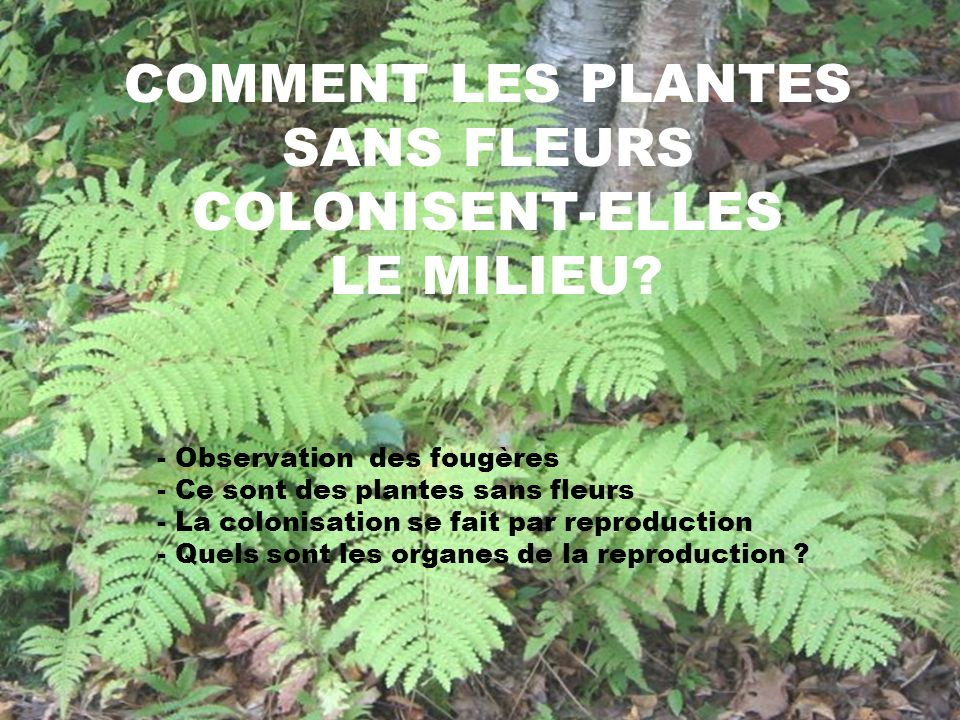 COMMENT LES PLANTES SANS FLEURS COLONISENT-ELLES LE MILIEU