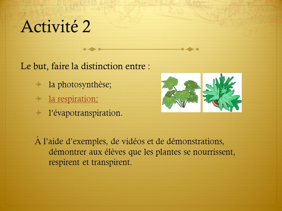 Activité 2 Le but, faire la distinction entre : la photosynthèse;