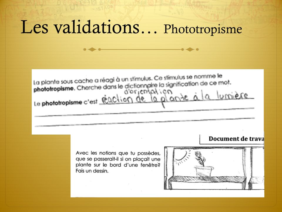 Les validations… Phototropisme