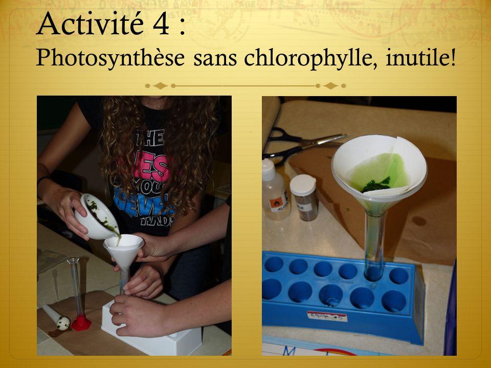 Activité 4 : Photosynthèse sans chlorophylle, inutile!
