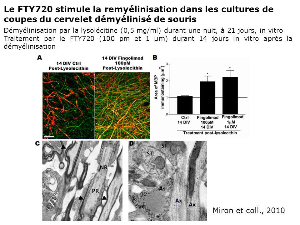 Le FTY720 stimule la remyélinisation dans les cultures de coupes du cervelet démyélinisé de souris