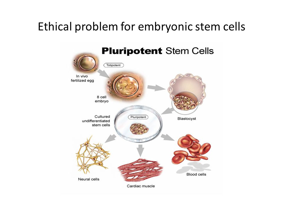 Ethical problem for embryonic stem cells