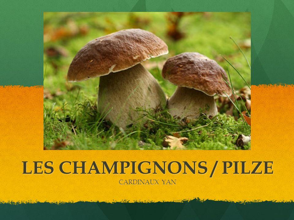 LES CHAMPIGNONS / PILZE CARDINAUX YAN