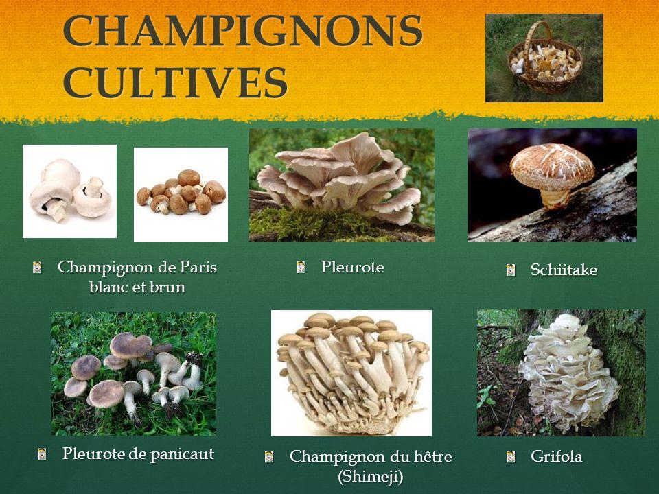 CHAMPIGNONS CULTIVES Champignon de Paris blanc et brun Pleurote