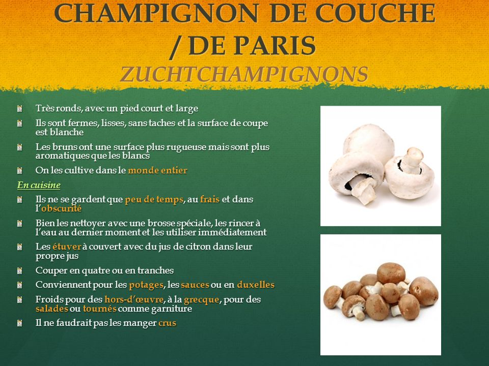 CHAMPIGNON DE COUCHE / DE PARIS ZUCHTCHAMPIGNONS