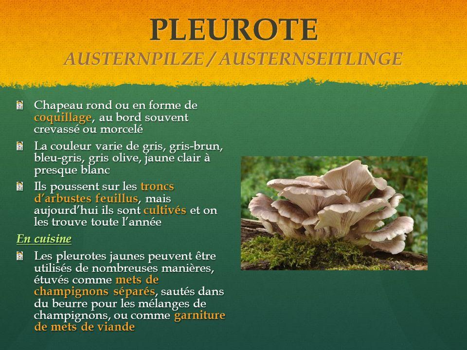 PLEUROTE AUSTERNPILZE / AUSTERNSEITLINGE