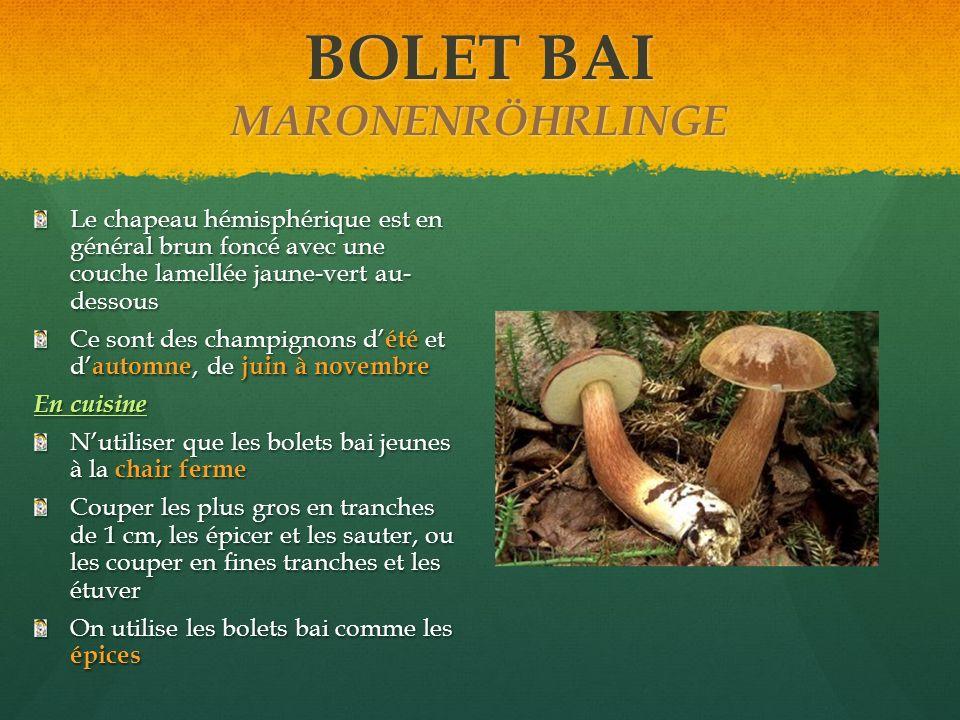 BOLET BAI MARONENRÖHRLINGE