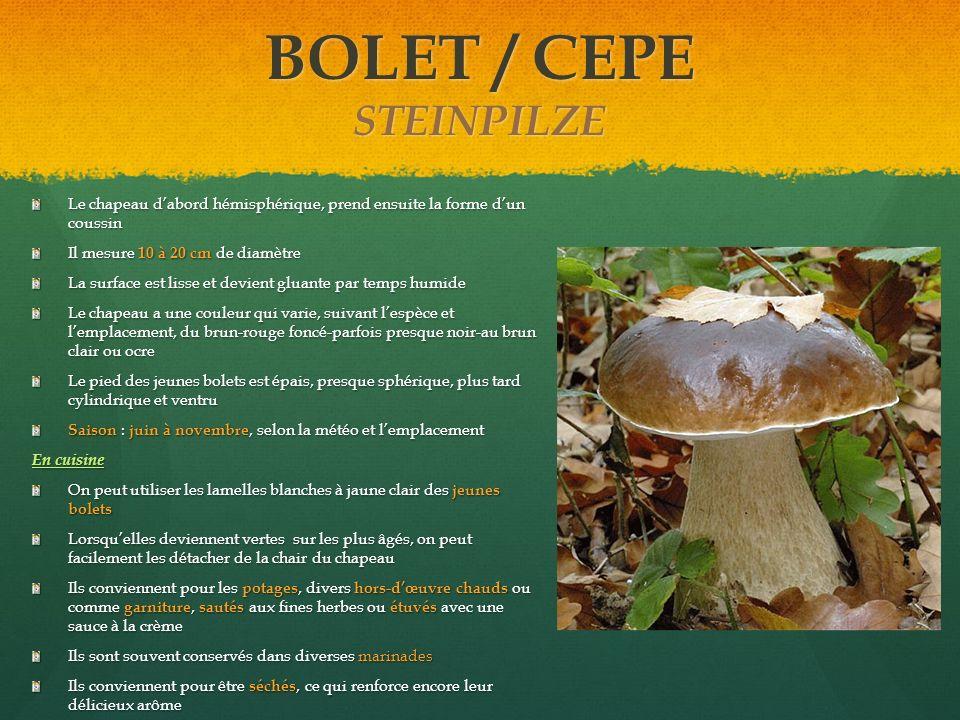 BOLET / CEPE STEINPILZE