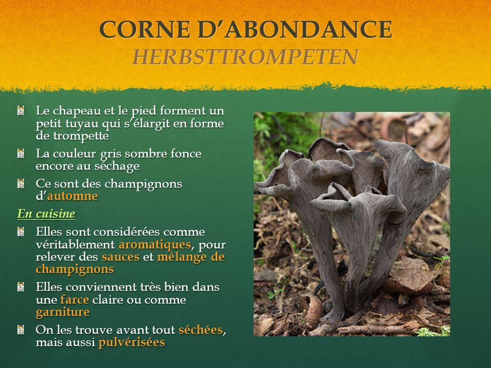 CORNE D'ABONDANCE HERBSTTROMPETEN