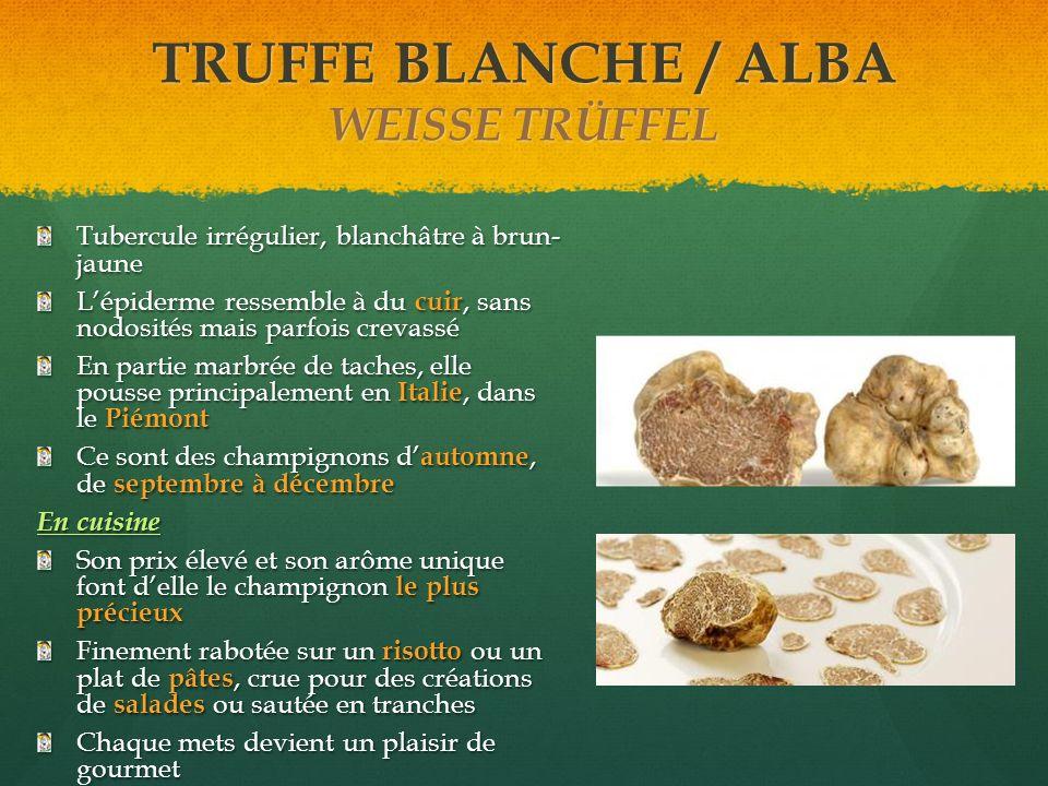 TRUFFE BLANCHE / ALBA WEISSE TRÜFFEL