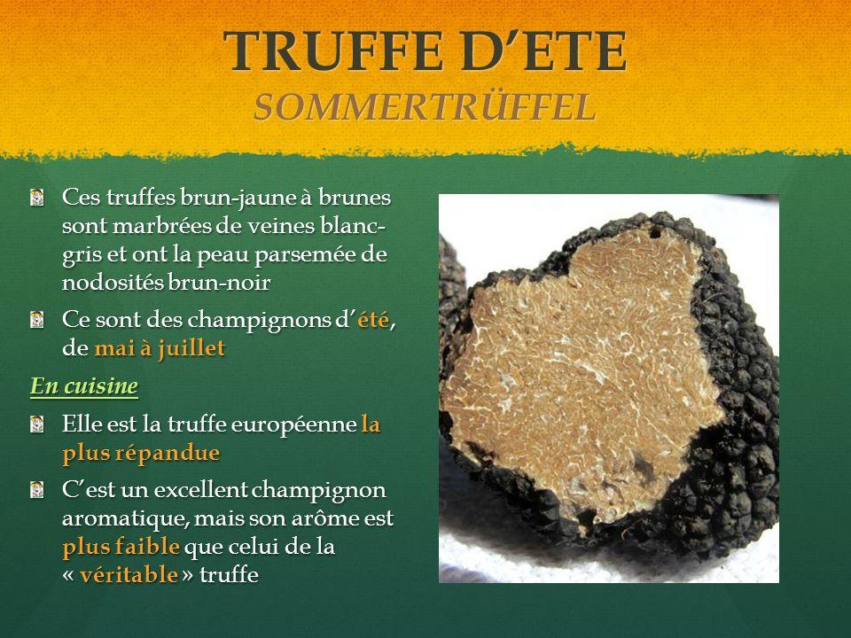 TRUFFE D'ETE SOMMERTRÜFFEL