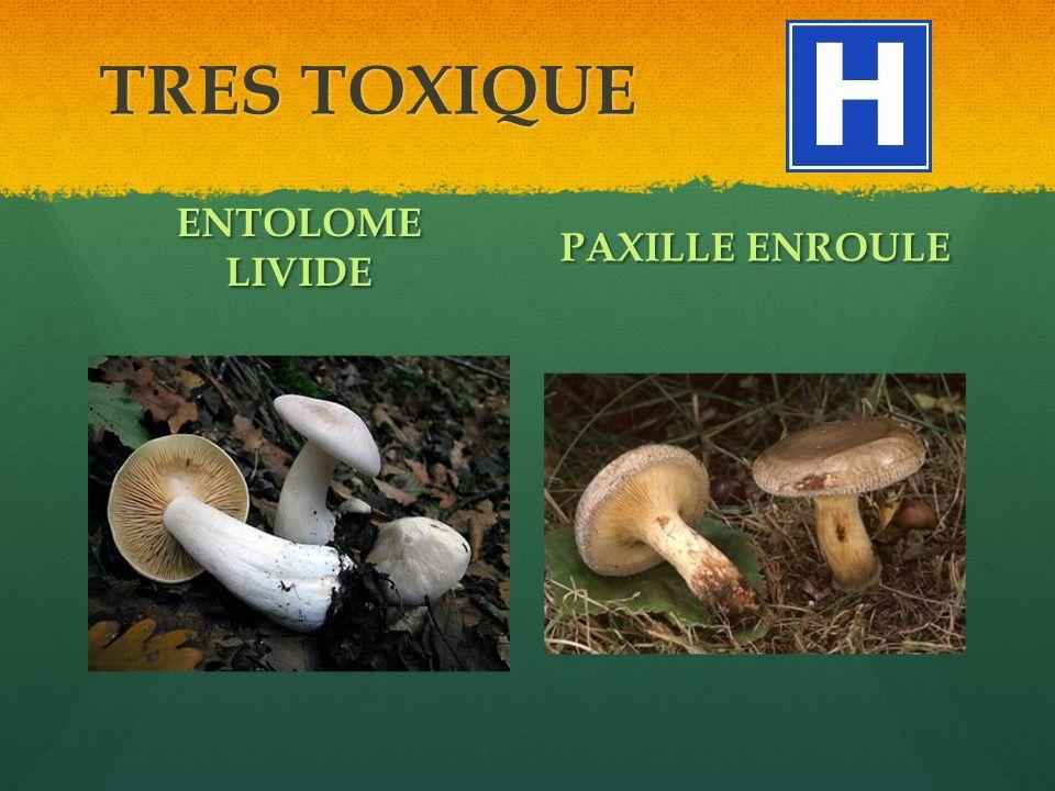 TRES TOXIQUE ENTOLOME LIVIDE PAXILLE ENROULE