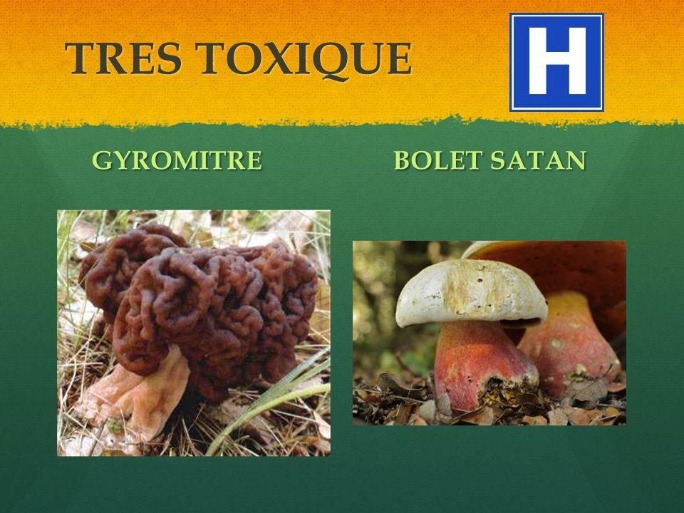 TRES TOXIQUE GYROMITRE BOLET SATAN