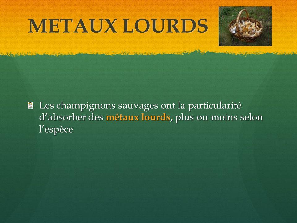 METAUX LOURDS Les champignons sauvages ont la particularité d'absorber des métaux lourds, plus ou moins selon l'espèce.