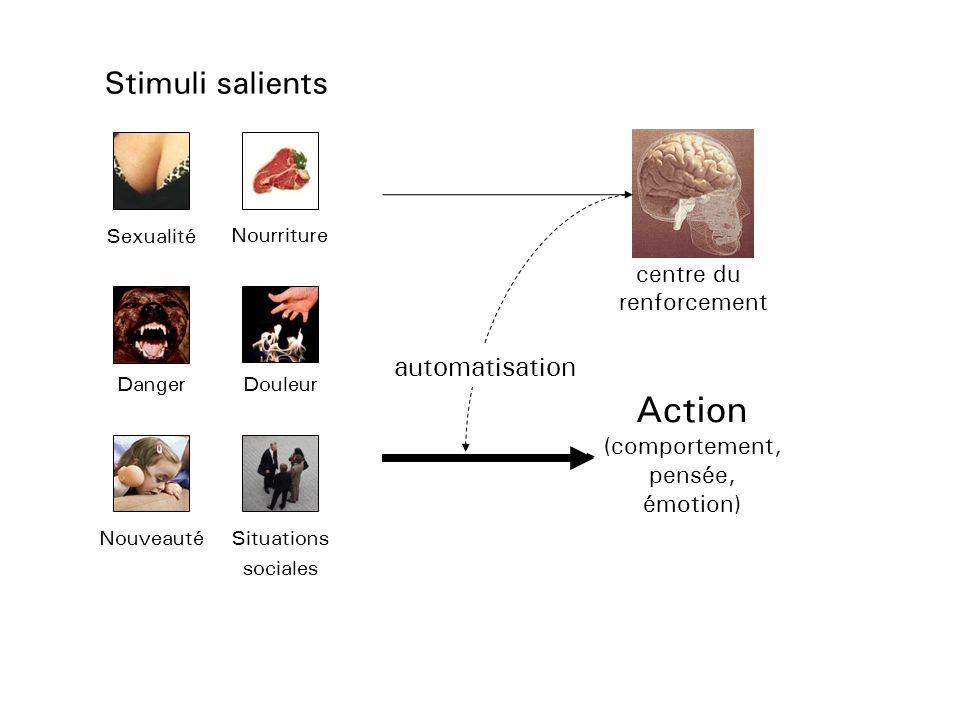 Action Stimuli salients automatisation centre du renforcement