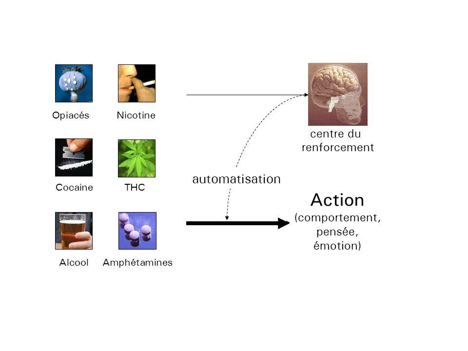 Action automatisation centre du renforcement (comportement, pensée,