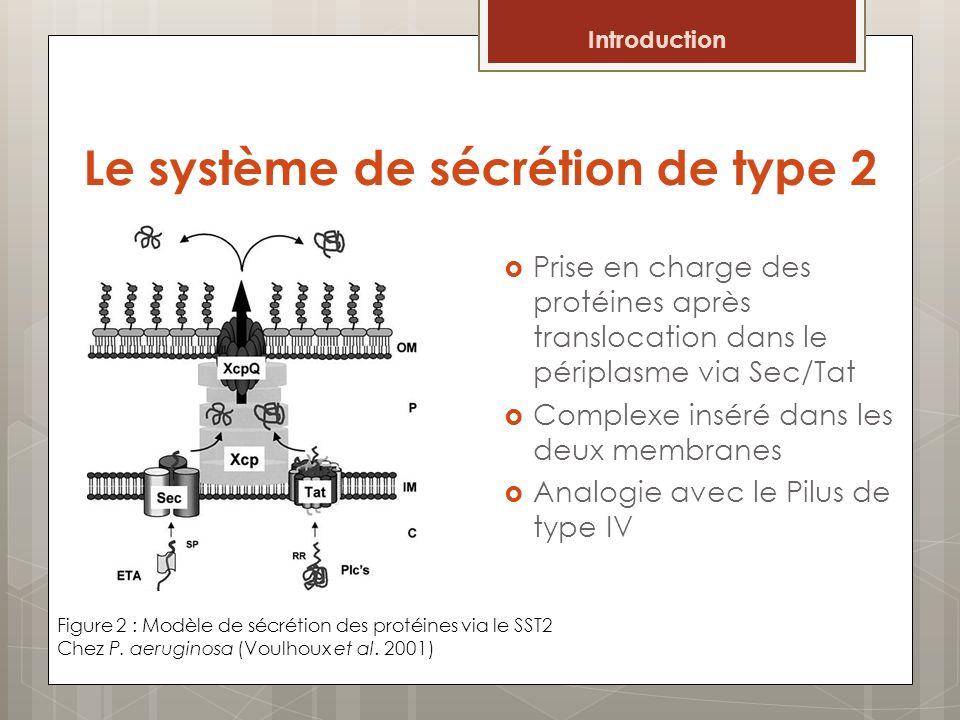 Le système de sécrétion de type 2