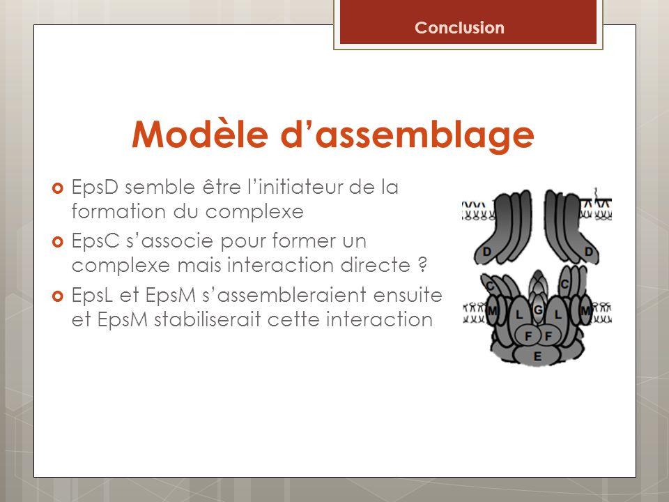 Conclusion Modèle d'assemblage. EpsD semble être l'initiateur de la formation du complexe.