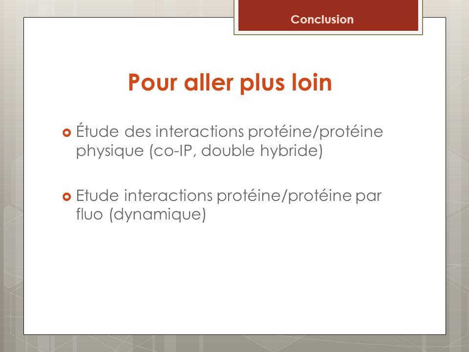 Conclusion Pour aller plus loin. Étude des interactions protéine/protéine physique (co-IP, double hybride)