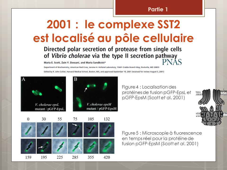 2001 : le complexe SST2 est localisé au pôle cellulaire