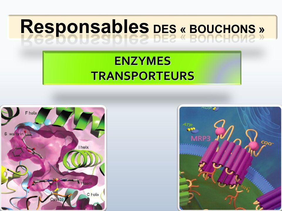Responsables DES « BOUCHONS »