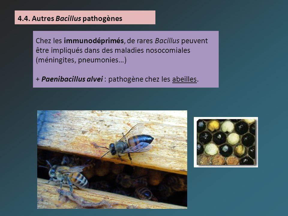 4.4. Autres Bacillus pathogènes