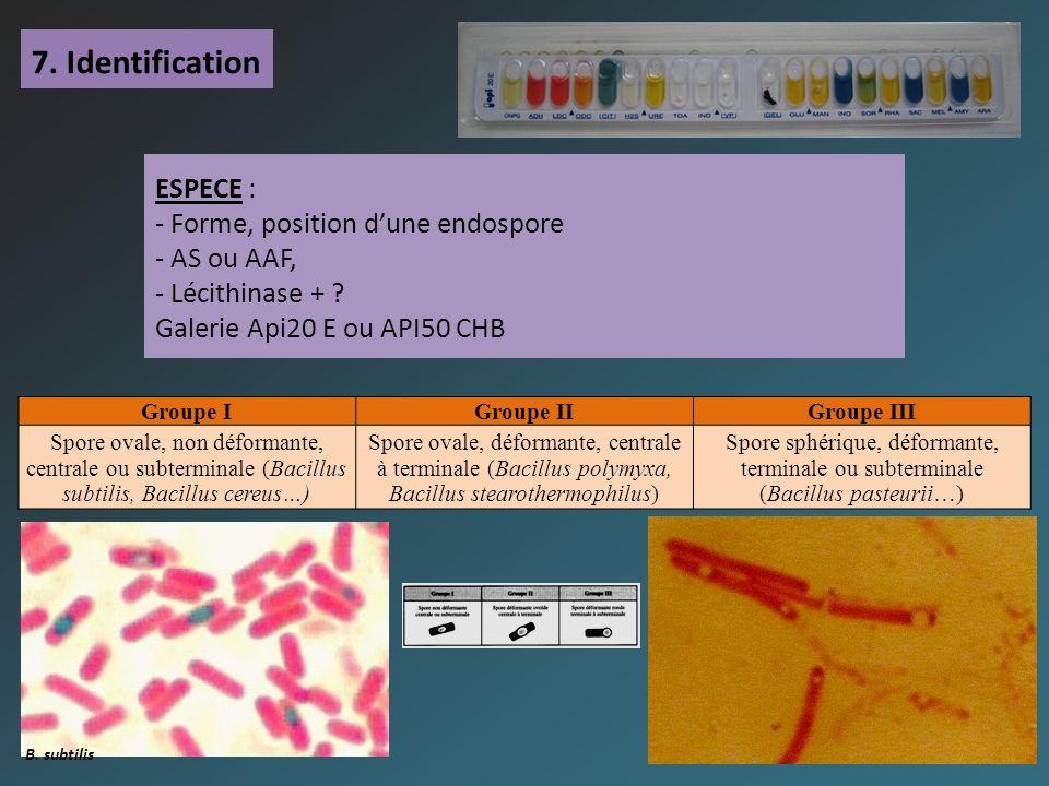 7. Identification ESPECE : - Forme, position d'une endospore