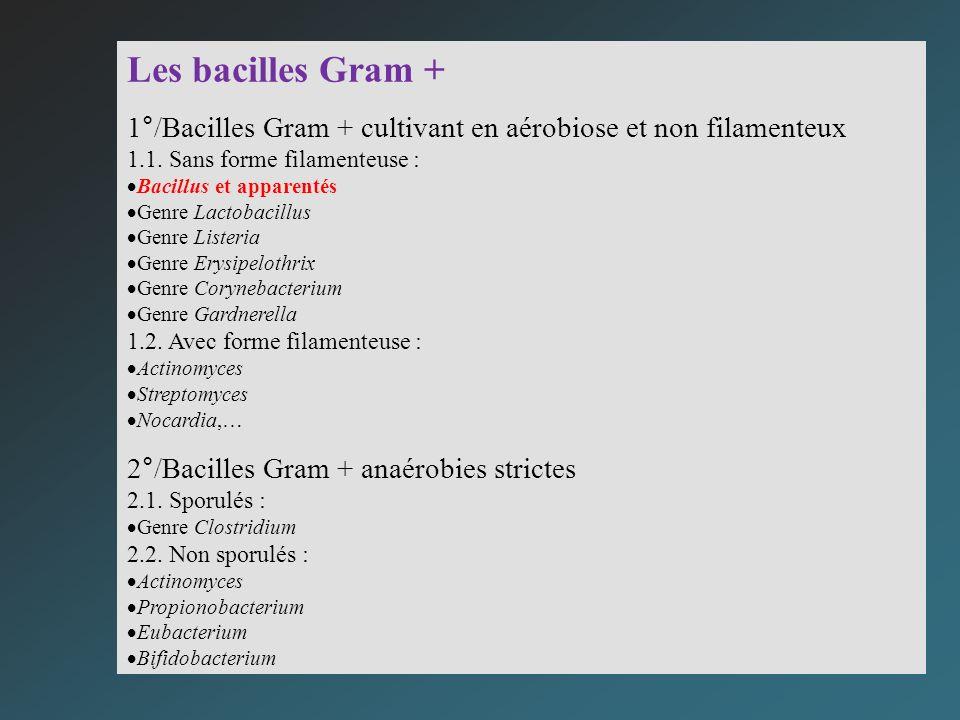 Les bacilles Gram + 1°/Bacilles Gram + cultivant en aérobiose et non filamenteux. 1.1. Sans forme filamenteuse :